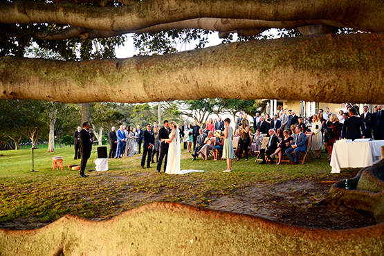 A wedding beneath the canopy of a giant Moreton Bay fig tree on the foreshores of Watsons Bay, Sydney