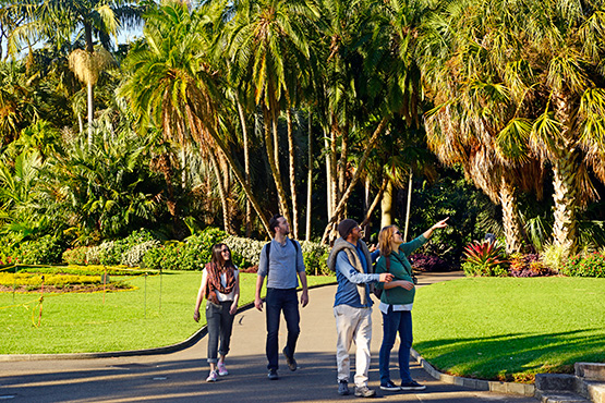 Visitors delight in the large public spaces of the Sydney Royal Botanic Garden