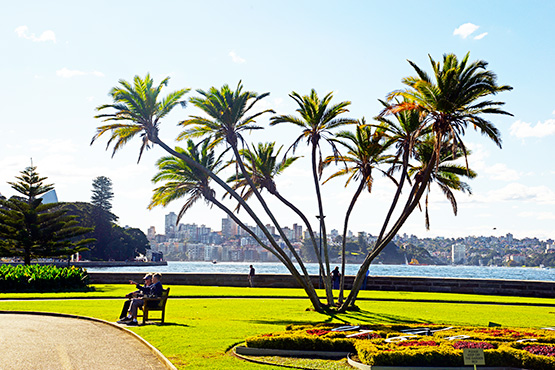 The walking path that skirts around the foreshores of Farm Cove and the Sydney Royal Botanic Garden