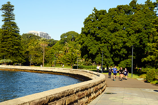 The Farm Cove walking path is popular with lunchtime joggers in the Sydney Royal Botanic Garden