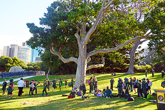 Schoolchildren on a field excursion in the Sydney Royal Botanic Garden