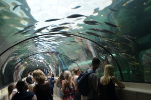 Underwater Walkways, Sydney Aquarium