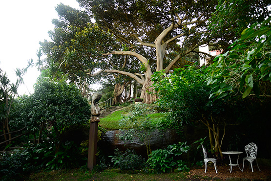 Top of Wendy's Secret Garden in Lavender Bay, Sydney