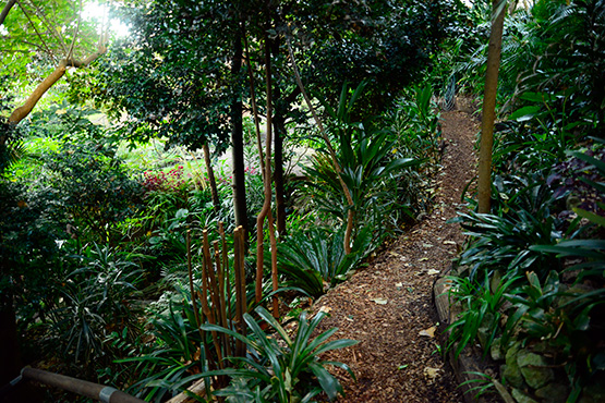 Outlook on Wendy's Secret Garden in Lavender Bay, Sydney