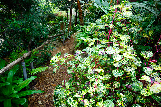 Variagated plants in Wendy's Secret Garden in Lavender Bay, Sydney