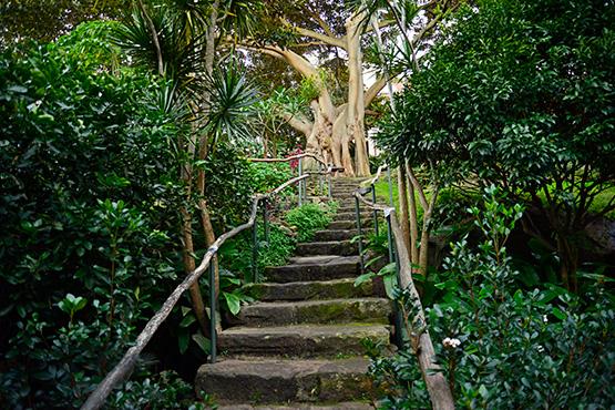 Stone stairs leading in, or out, of Wendy's Secret Garden in Lavender Bay, Sydney