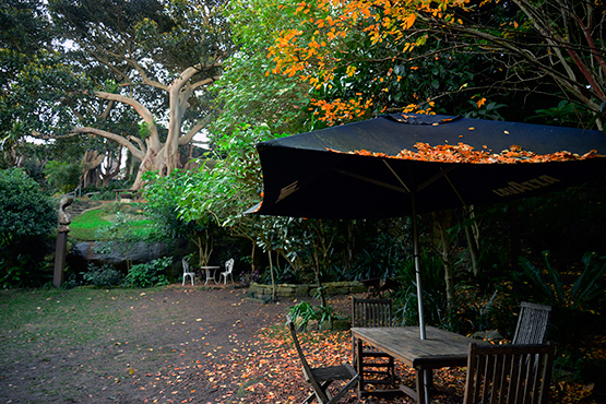 Autumn in Wendy's Secret Garden in Lavender Bay, Sydney