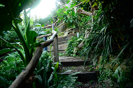 Timber steps in Wendy's Secret Garden in Lavender Bay, Sydney
