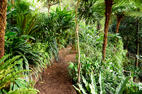 Lush green foliage almost covers the path in Wendy's Secret Garden in Lavender Bay, Sydney