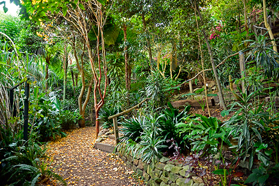 Near the bottoms of Wendy's Secret Garden in Lavender Bay, Sydney