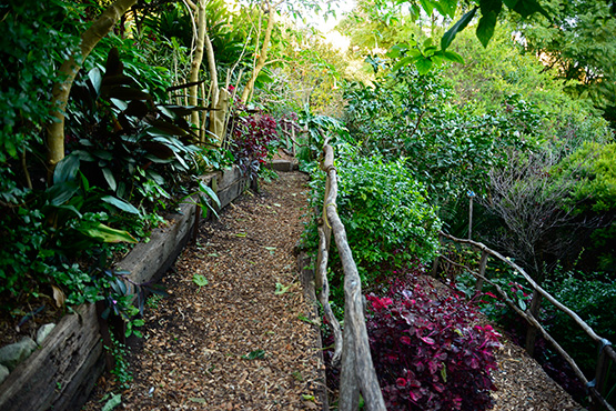 Network of paths in Wendy's Secret Garden in Lavender Bay, Sydney